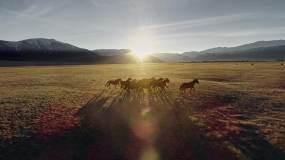 4K-夕阳下的奔跑的骏马群-1视频素材
