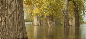 陽光樹木水面倒影夕陽逆光大美中國4k視頻素材