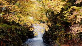 深秋秋天流水楓葉落葉自然風光視頻素材