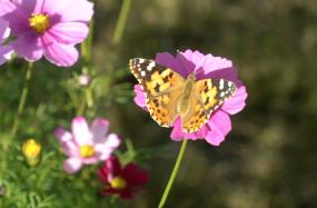 4K花朵蝴蝶蜜蜂慢镜头-自然空镜-清晨永利官网网址是多少