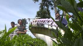 茶农茶园采茶岩茶采摘茶园收获视频素材