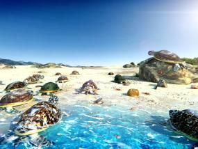 海龟沙滩特写三维视频素材