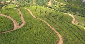 绿色梯田种茶茶园航拍视频素材
