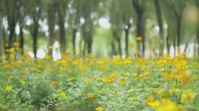 自然花草素材视频素材