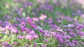 蜜蜂蝴蝶视频素材