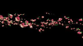 花枝藤曼生长桃花梅花带通道素材视频素材
