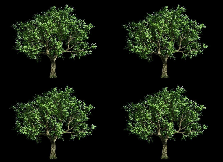 大树-3景观树飘动