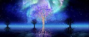 唯美海面极光粒子树夜晚舞台背景视频素材