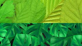 2个绿叶动画背景视频素材视频素材包