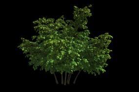 绿色的树视频素材