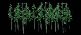 【4k原创】禅意竹林背景-微风浮动视频素材