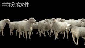 羊群合成分层文件视频素材包
