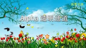 花草蝴蝶Alpha透明通道背景可换视频素材包