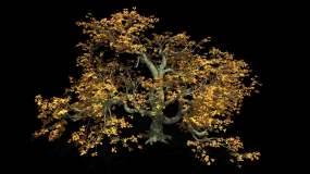 大树摇摆风动画视频素材