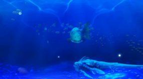 HY-VJ-HY海底鲸鱼视频素材