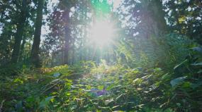 山林树林逆光视频素材