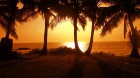 夕阳下海边椰树剪影视频素材