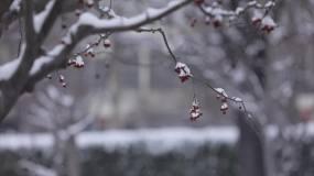 北京下雪,积雪,大红灯笼高高挂,节日喜庆视频素材