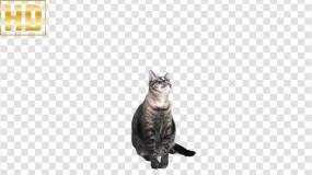 小猫咪-alpha通道视频素材包