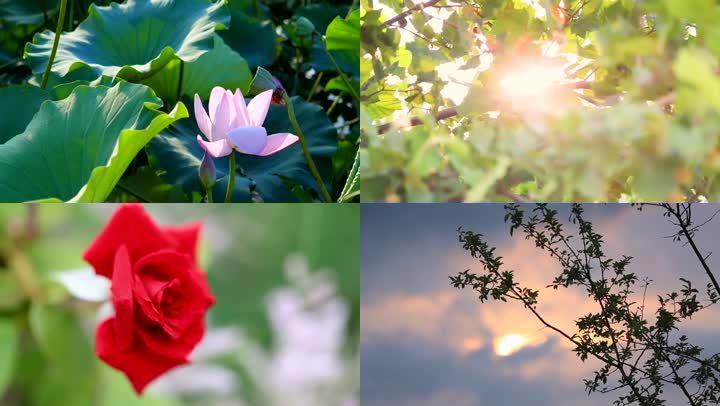 实拍自然风景植物花卉9分钟集锦