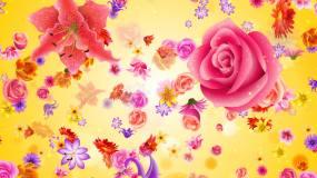 情人节花朵视频素材