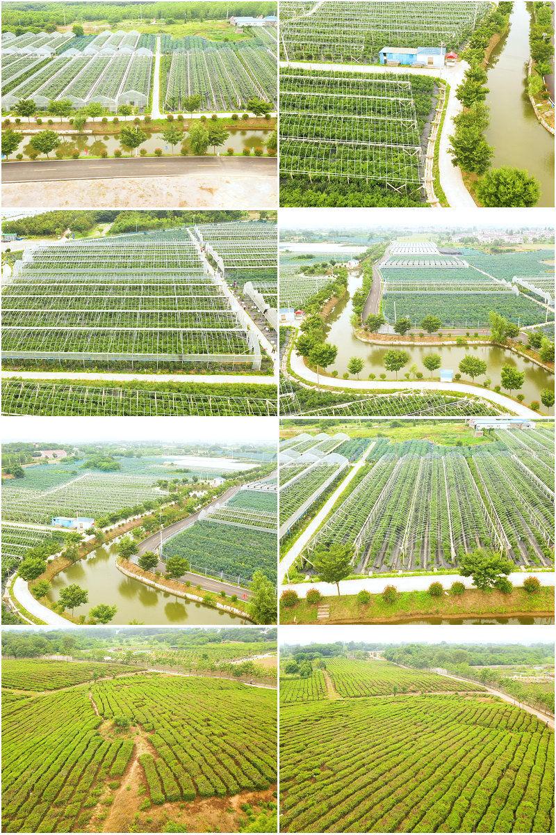 航拍农场航拍现代农业观赏农业草莓种