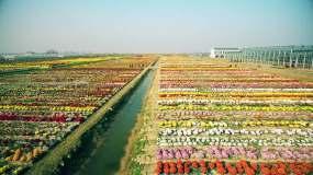 花卉种植基地视频素材