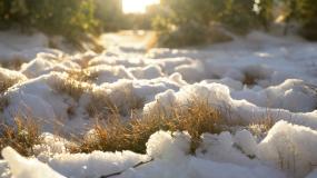 4K冬天积雪阳光小草暖阳视频素材