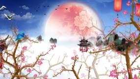 周杰伦-菊花台视频素材