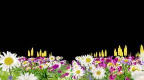 花丛透明通道视频素材包