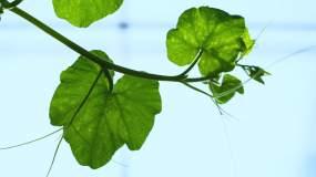 绿色蔬菜大棚种植农业自然视频素材