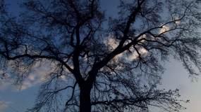 友谊地久天长大树延时云视频素材