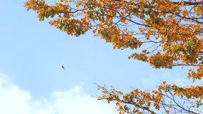 秋天落叶高清视频素材视频素材