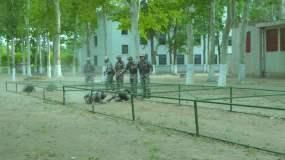 军人动作训练视频素材包