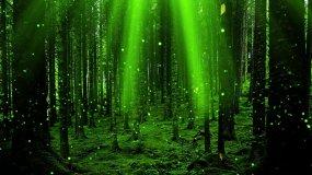 4K绿色萤火虫向上循环飞舞视频素材