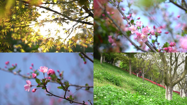 春天百花盛开