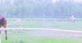 骑马旅游视频素材