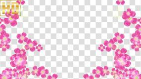 粉色花朵视频边框-alpha通道视频素材包