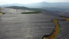 航拍三七种植基地视频素材