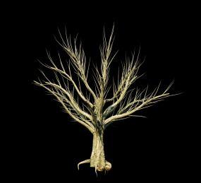高清树生长落叶四季变化视频素材