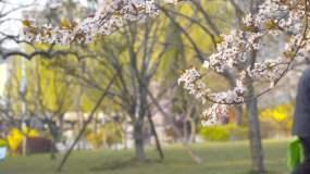 唯美公园樱花游客升格慢镜头视频素材