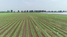现代化农业航拍视频素材