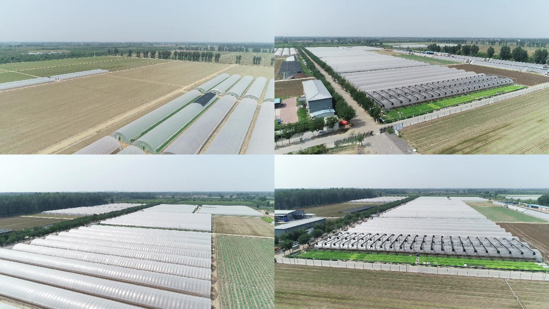 现代化农业大棚和菜地航拍
