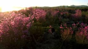 风景,草原,山,树木视频素材