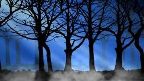 4K黑暗森林背景循环视频素材