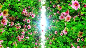 4K唯美的花叢背景素材視頻素材