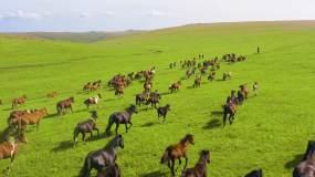4k草原上的马航拍视频素材