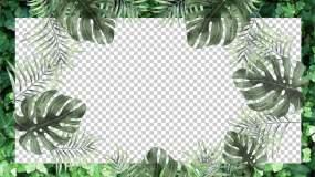 绿叶边框,环保清新视频素材包