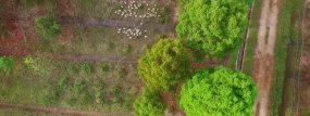 实拍南方竹林雨天乡村猪鸭鹅以及航拍动态视频素材