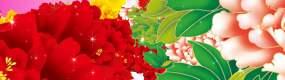 牡丹花花海视频素材